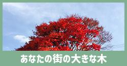 あなたの街の大きな木